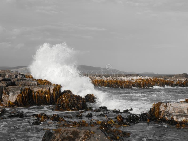 Acantilado del mar fotografía de archivo libre de regalías