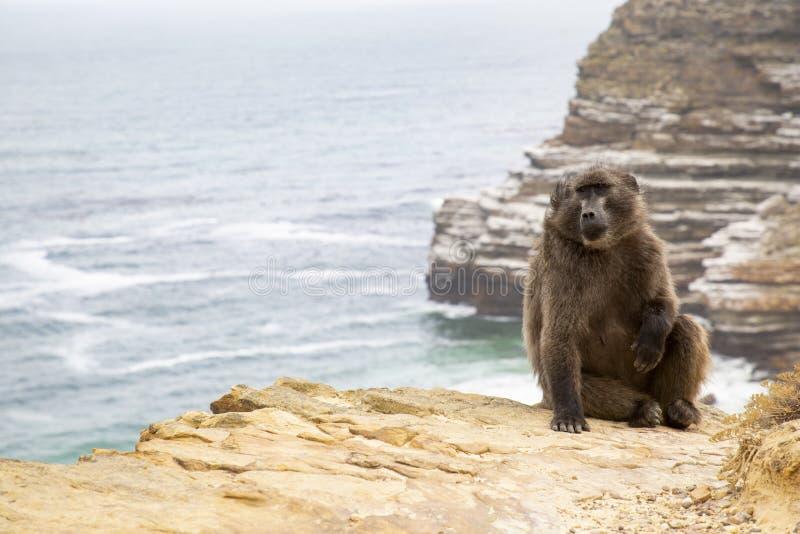Acantilado del mono foto de archivo libre de regalías