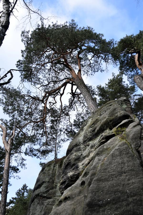 Acantilados en paraíso bohemio - las rocas de la piedra arenisca de Prachov - árbol en el top imágenes de archivo libres de regalías