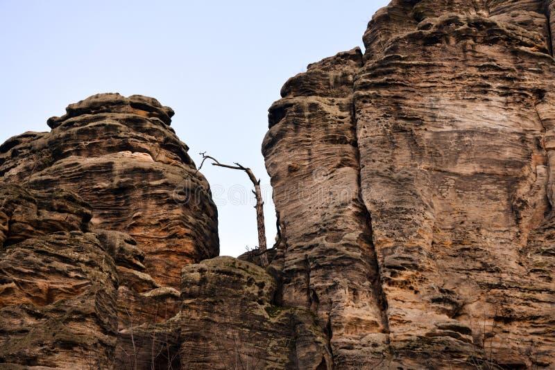 Acantilados en paraíso bohemio - las rocas de la piedra arenisca de Prachov - árbol a solas foto de archivo libre de regalías