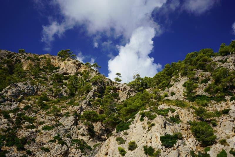 Acantilados y árboles de pino en la costa del norte del ` s de Majorca, Balearic Island, España foto de archivo