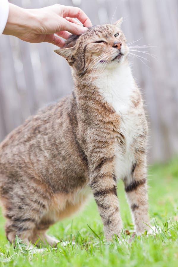 Acariciar el gato fotos de archivo libres de regalías