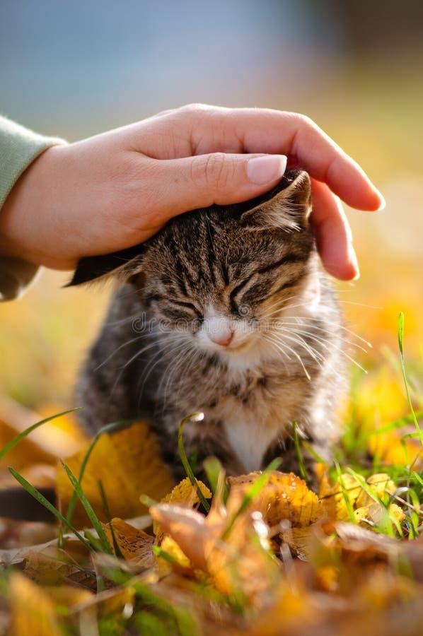 Acariciar un gatito del tabby foto de archivo