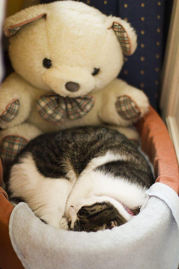 Acaricie el gato fotos de archivo libres de regalías