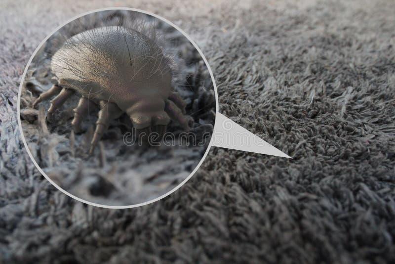Acarides de la poussière de Chambre - rendu 3D photo stock