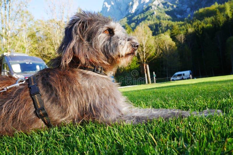 Accampandosi con il cane fotografia stock