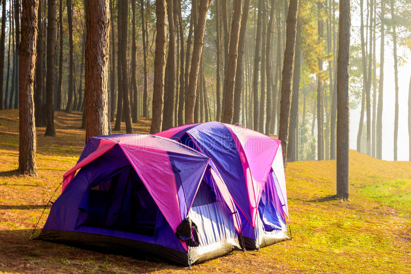 Accampandosi e tenda sotto l'abetaia nel tramonto al perno di Pang Ung immagine stock libera da diritti