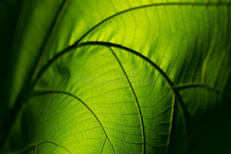 Accartocciamento di verde della natura del primo piano su struttura per fondo astratto fotografie stock