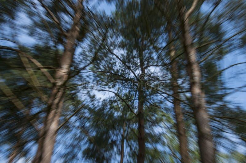 Accelerando attraverso il legno immagini stock libere da diritti