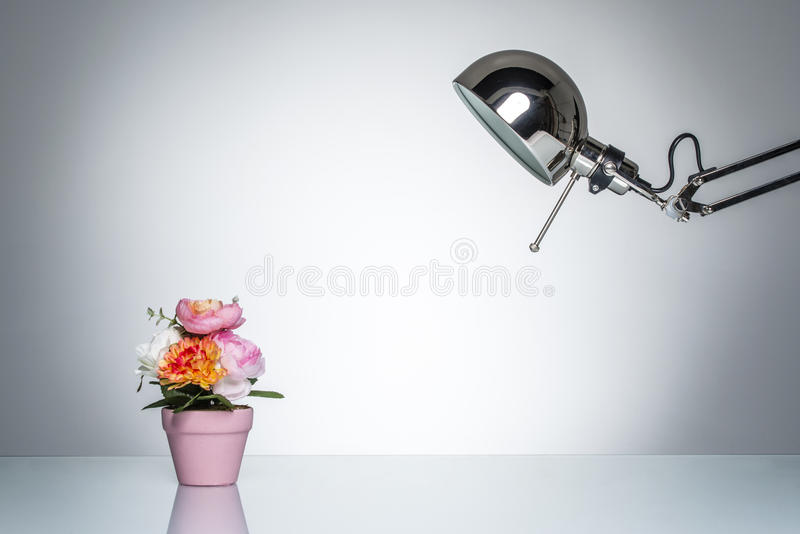 Accendere il vaso di fiore rosa con la lampada di scrittorio fotografie stock libere da diritti