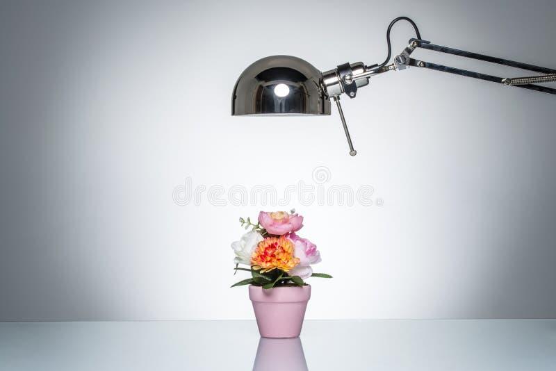Accendere il vaso di fiore rosa con la lampada di scrittorio immagine stock libera da diritti