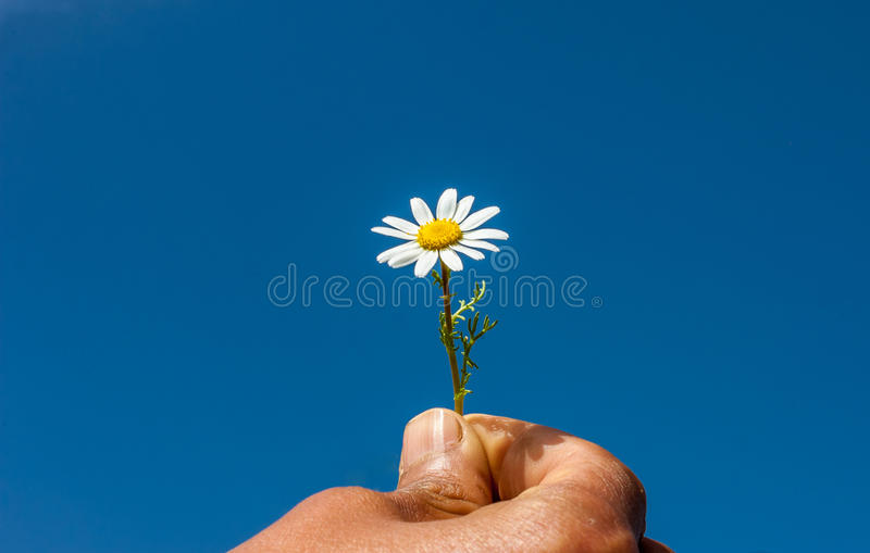 Accept my friendship , sky, hand, daisy, concept.flower royalty free stock images