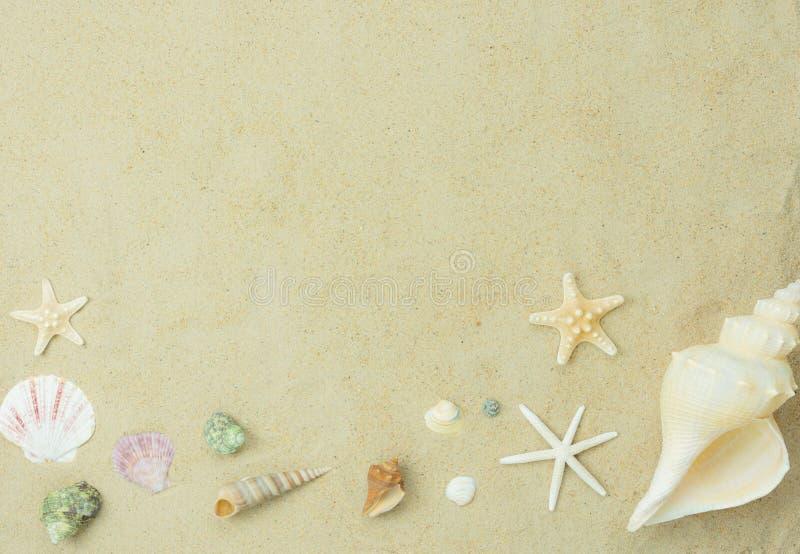 Accesorios planos del esencial de la endecha para que viaje vare viaje Cáscara de la variedad en el mar blanco de la arena fotos de archivo libres de regalías