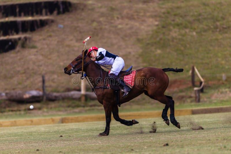 Acción de Polo Player Pony Hit Ball fotografía de archivo