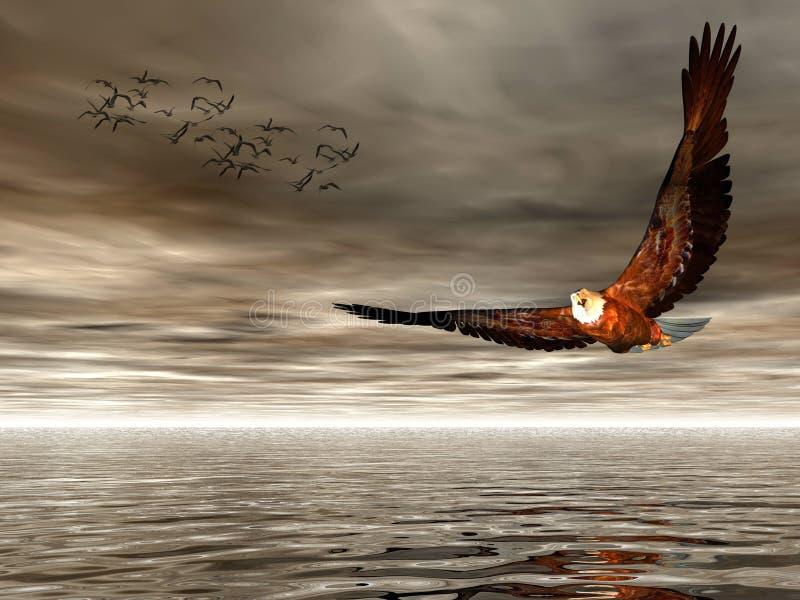 Accipitridae, aigle chauve américain. illustration de vecteur