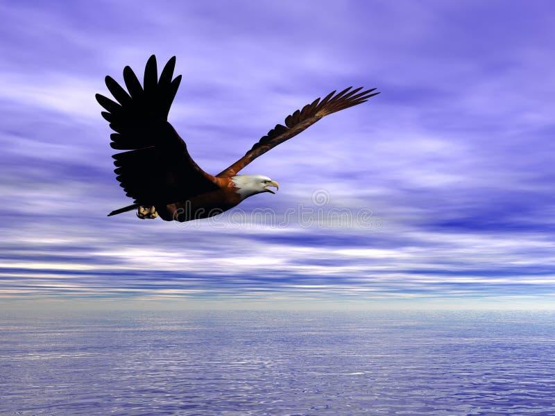 Accipitridae, amerikanischer kahler Adler. stock abbildung