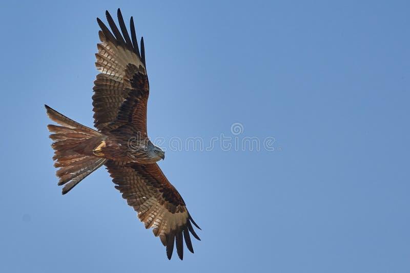 Accipitriformes, Bird, Bird Of Prey, Eagle Free Public Domain Cc0 Image