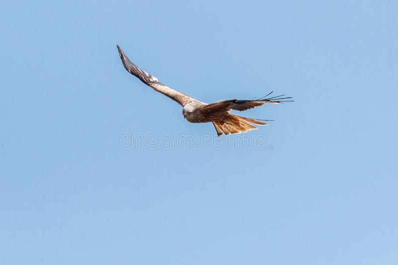 Accipitriformes, Bird, Eagle, Bird Of Prey Free Public Domain Cc0 Image