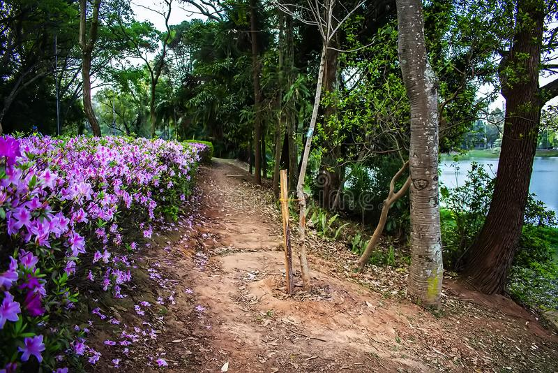 Acclimatization park in sao paulo brazil forest of clay among trees royalty free stock photography