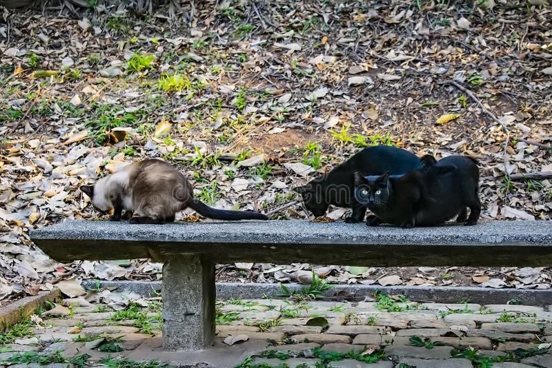 Acclimatization park in sao paulo brazil three abandoned cats stock photos