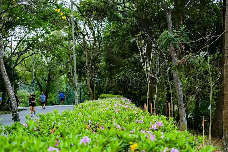 Acclimatization park in sao paulo brazil Plant wall divides forest stock photos