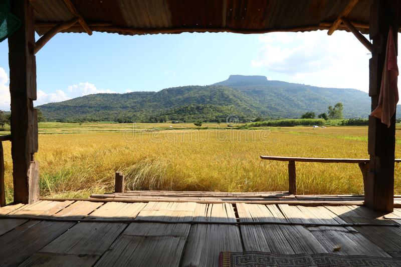 Accommodation for watching rice fields. In Phu Luang District, Loei Province, Thailand royalty free stock images
