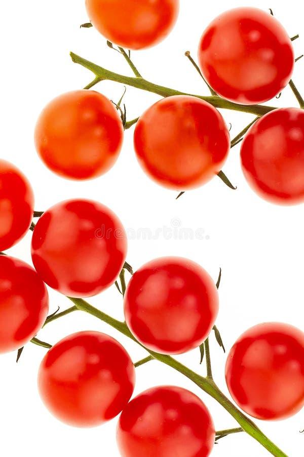 Accoppi dei rami dei pomodori su un ramo di mini primo piano rosso ciliegia delle verdure di una parte di una base variopinta immagini stock