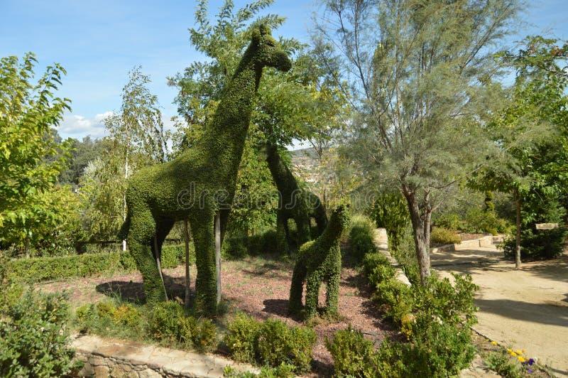 Accoppi delle giraffe con il loro bambino ricreato in Fern Sculpture fotografia stock libera da diritti