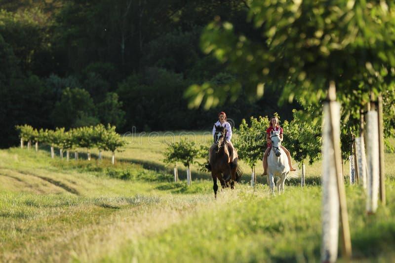 Accoppi delle ragazze sui cavalli che camminano attraverso la natura dell'estate nel tempo di pomeriggio immagini stock libere da diritti