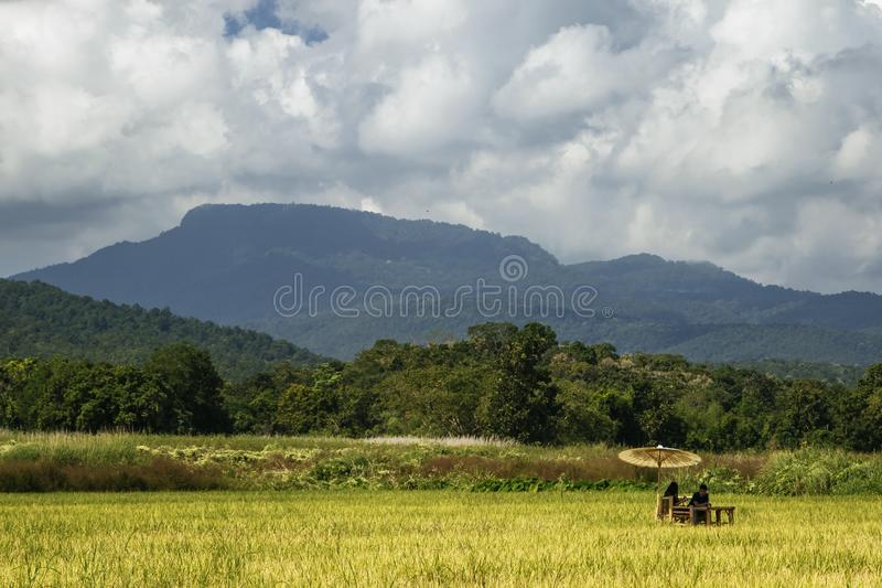 Accoppi la seduta sotto l'ombrello nel campo in Chiang Mai Thailand immagine stock