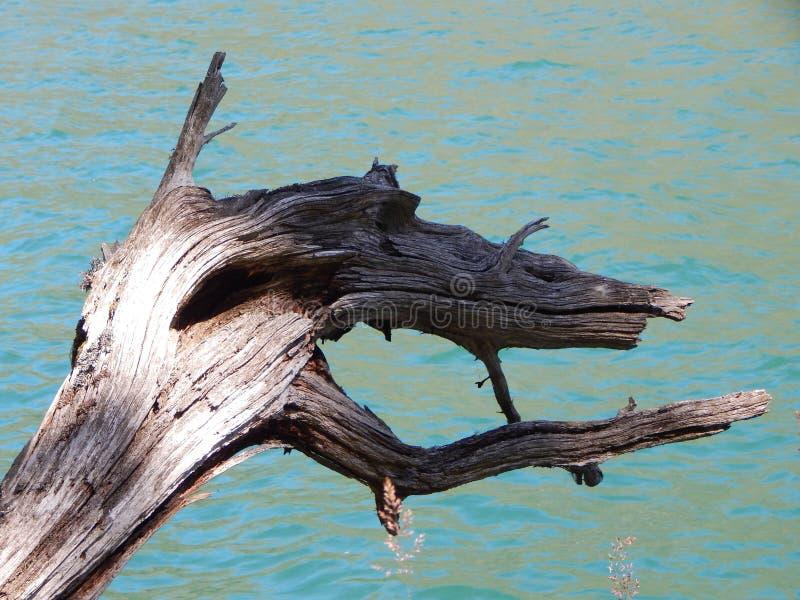 Accroc en bois fabuleux dans un lac de montagne photographie stock libre de droits