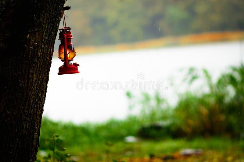 Accrocher de lampe d'essence d'un arbre photo stock