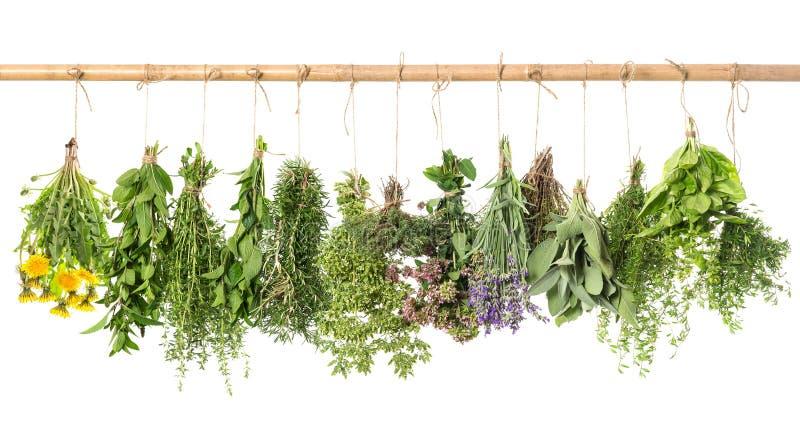 Accrocher frais d'herbes d'isolement sur le fond blanc Basil, romarin photo libre de droits