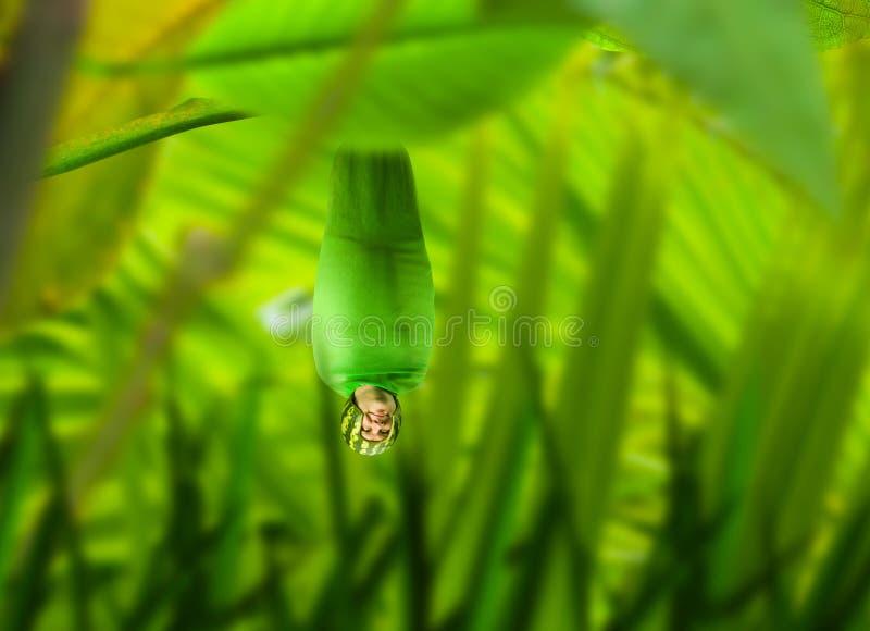 Accrocher humain d'insecte à l'envers parmi des usines image stock
