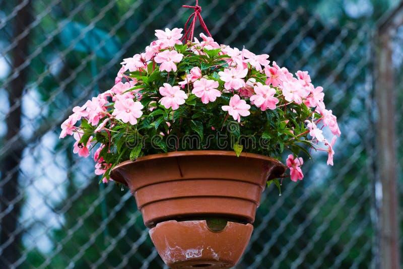 Accrocher rose de fleur photos stock
