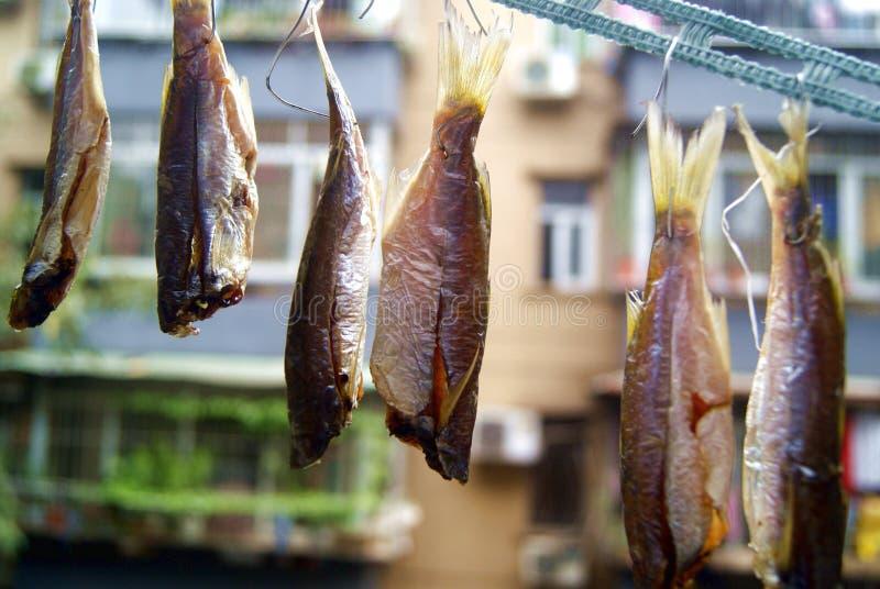 Accrocher sur une ligne pour sécher des poissons image libre de droits
