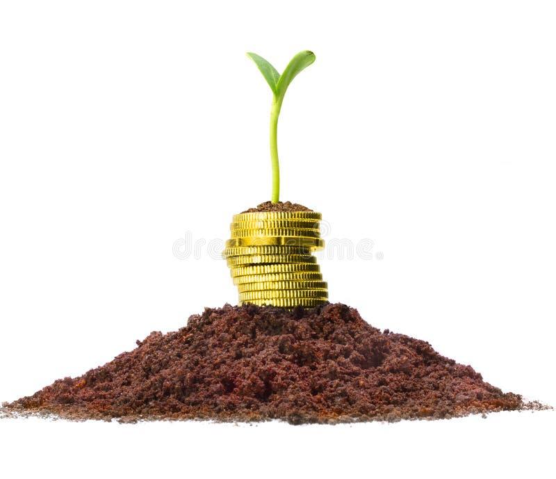 Accroissement d'argent. images stock