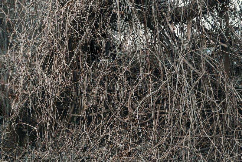 Accumulation des branches sèches photo stock