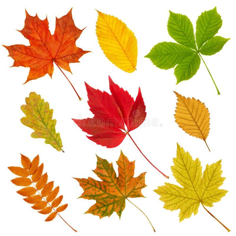 Accumulazione dei fogli di autunno. fotografie stock