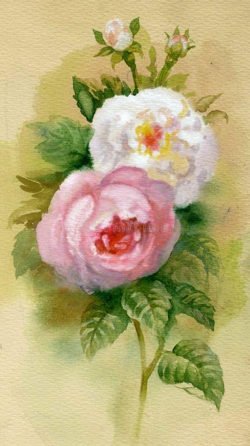 Accumulazione del fiore dell'acquerello: Rose illustrazione vettoriale