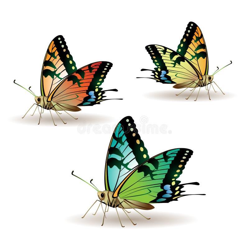 Accumulazione della farfalla royalty illustrazione gratis