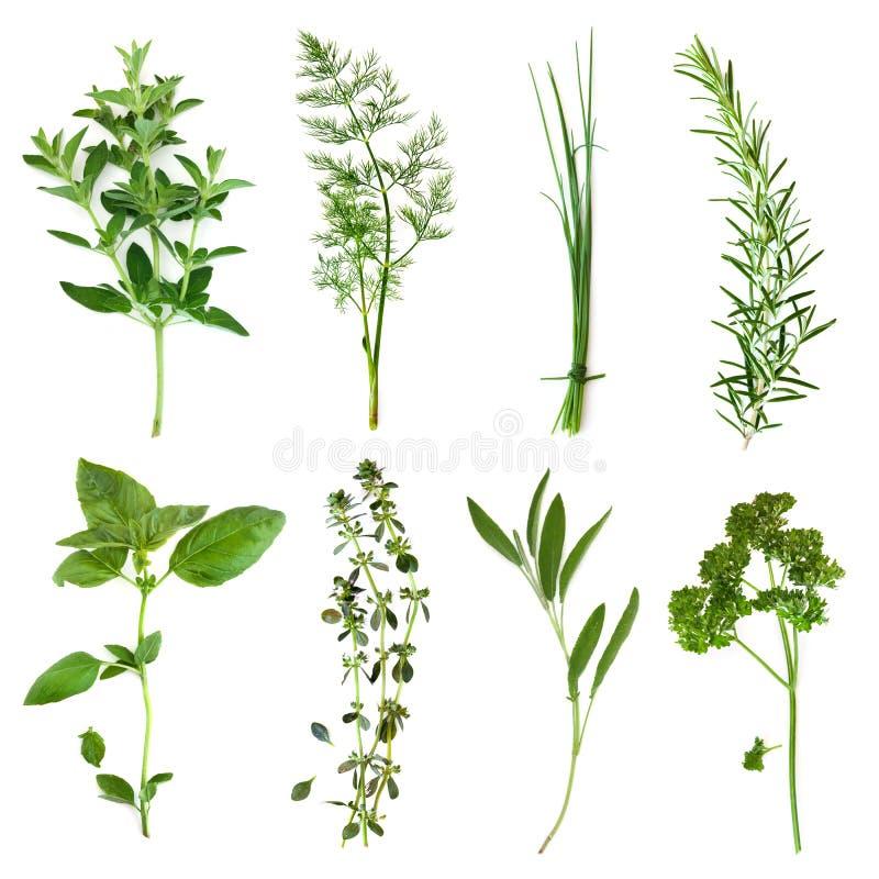 Accumulazione delle erbe immagini stock