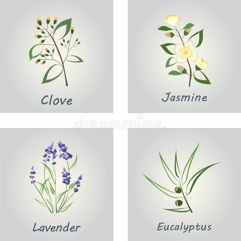 Accumulazione delle erbe Etichette per gli oli essenziali illustrazione vettoriale
