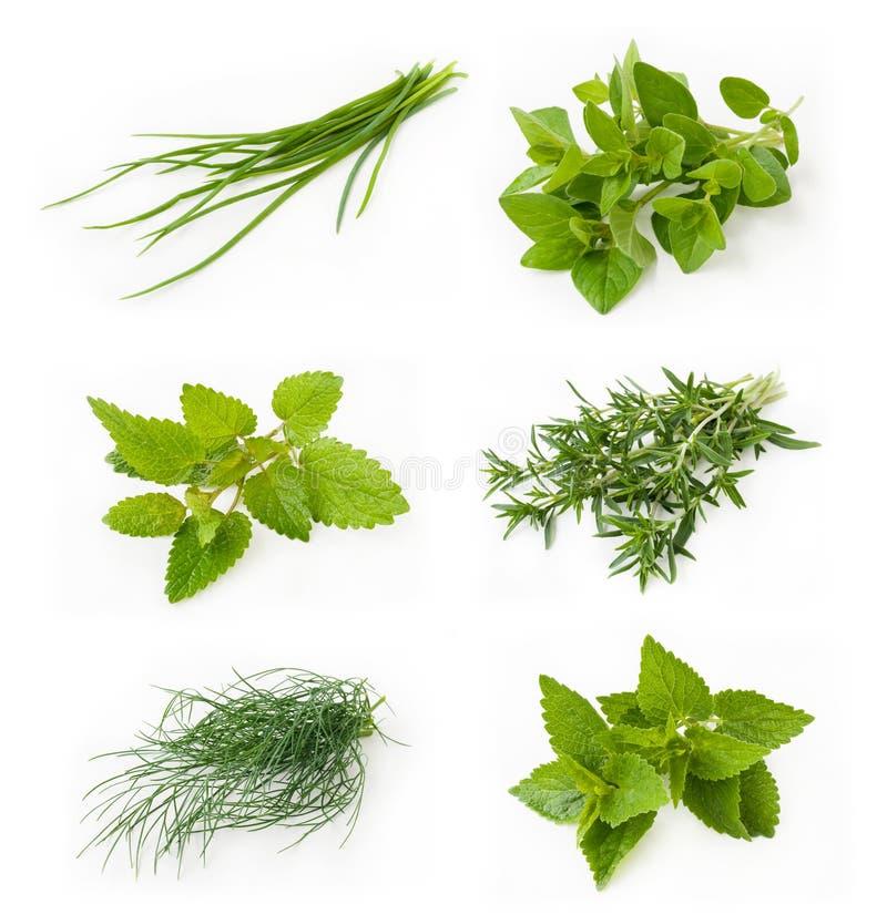 Accumulazione delle erbe fresche immagini stock libere da diritti