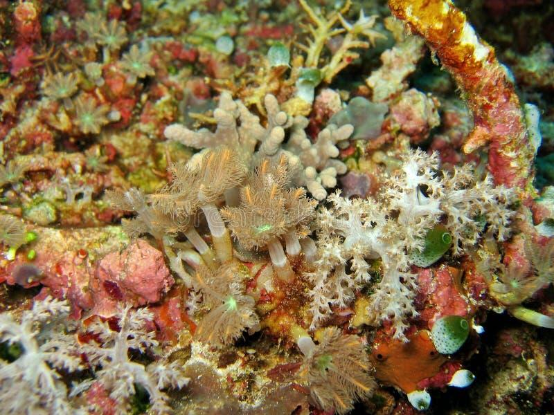 Accumulazione molle dei coralli immagini stock libere da diritti
