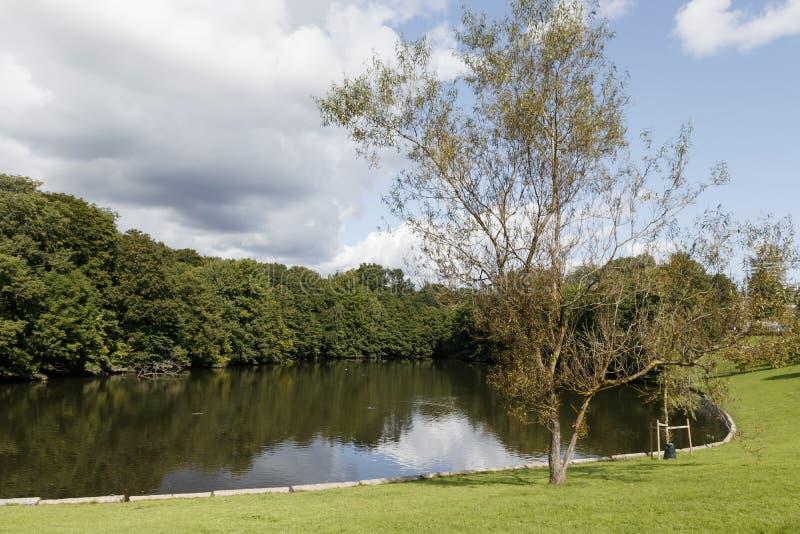 Accumulez en parc de ville avec la réflexion des arbres images libres de droits