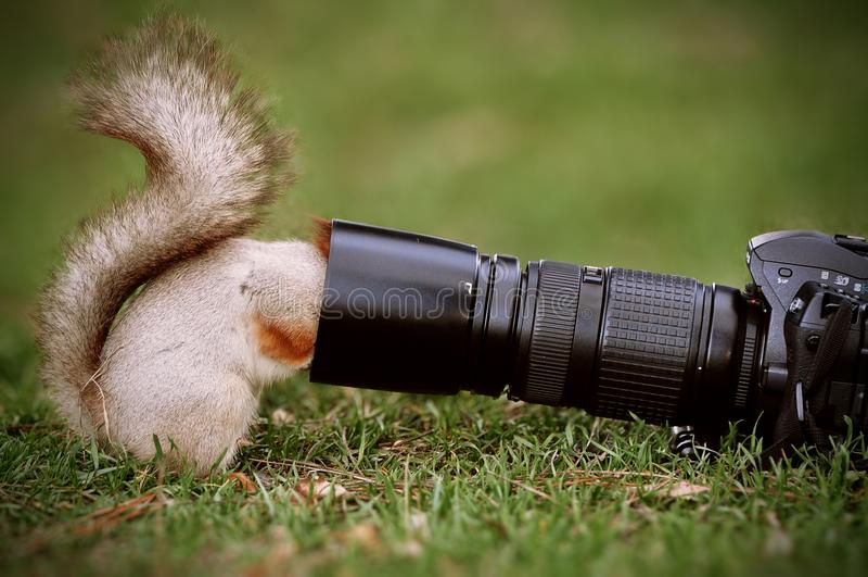 Accumulez les supports au sol et gardez l'objectif de caméra photographie stock libre de droits