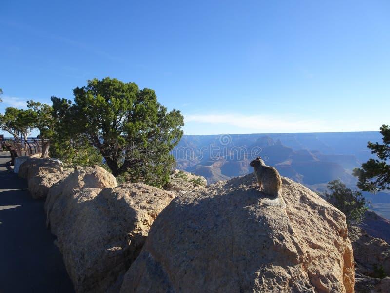 Accumulez se reposer sur la pierre chez Grand Canyon, Arizona, Etats-Unis images stock