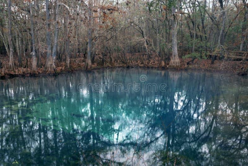 Accumuli con acqua blu nel parco di stato delle primavere del Manatee, Florida, Stati Uniti immagini stock libere da diritti
