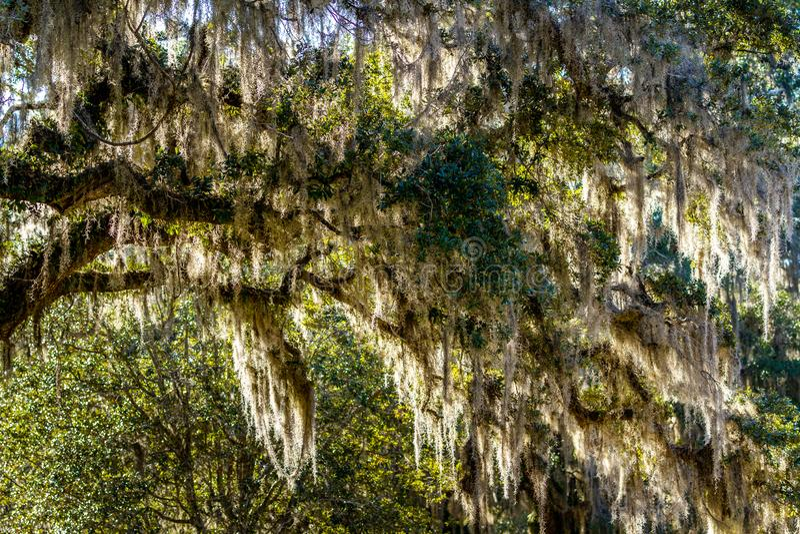 ACE Basin National Wildlife Refuge. Soith Carolina,USA royalty free stock photo